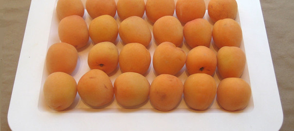 can gerbils eat apricots
